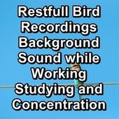 Restfull Bird Recordings Background Sound while Working Studying and Concentration by Sleep Sound Library