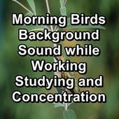 Morning Birds Background Sound while Working Studying and Concentration von Yoga Shala