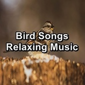 Bird Songs Relaxing Music by Spa Relax Music