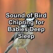 Sound of Bird Chipring for Babies Deep Sleep von Yoga