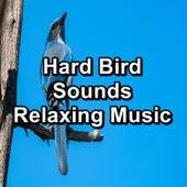 Hard Bird Sounds Relaxing Music von Sleep