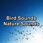 Bird Sounds Nature Sounds by Spa Relax Music