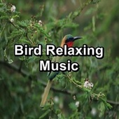 Bird Relaxing Music by Spa Music (1)
