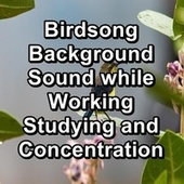 Birdsong Background Sound while Working Studying and Concentration by Serenity Spa: Music Relaxation