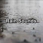 Rain Sounds by Deep Sleep Meditation