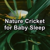 Nature Cricket for Baby Sleep de The Crickets