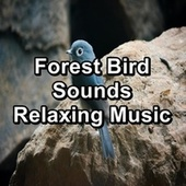 Forest Bird Sounds Relaxing Music von Nature Sounds (1)