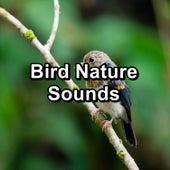 Bird Nature Sounds von Yoga