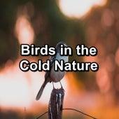 Birds in the Cold Nature von Calm Singing Brids Zone