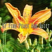 67 Find Peace and Quiet von Calming Sounds