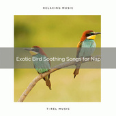2021 New: Exotic Bird Soothing Songs for Nap by Sleep Sound Library