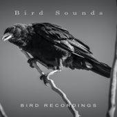 Bird Recordings by Bird Sounds