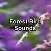Forest Bird Sounds by Bird Sounds