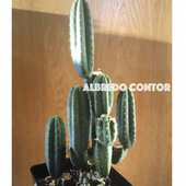 Let The Vibes Begin von Albredo Contor