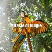 Miracle of Jungle by Nature Soundscape