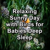 Relaxing Sunny Day with Birds for Babies Deep Sleep by Bird Sounds
