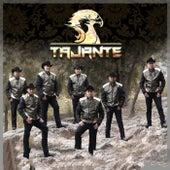 TAJANTE by Tajante
