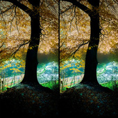Branches of the Tree by Grasscut
