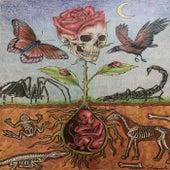 Dead Skulls by Vibe