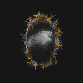 ID (Code Orange Remix) de Deathpact