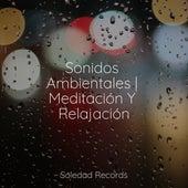 Sonidos Ambientales   Meditación Y Relajación de Musica Relajante