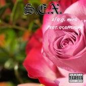 S.E.X. von El A.G. Mero