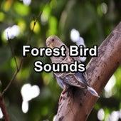 Forest Bird Sounds by Nature Bird Sounds