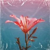 hibiscus by Sto Nii