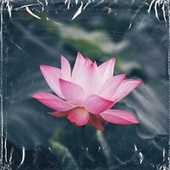 lotus by Sto Nii