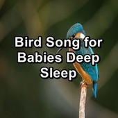 Bird Song for Babies Deep Sleep by Calm Singing Brids Zone