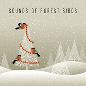 Sounds of Forest Birds – Natural and Ecological Melodies with Gentle Piano Sounds by Relaxing Piano Music Consort