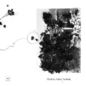 Flesh to Ashes LP by Nørbak