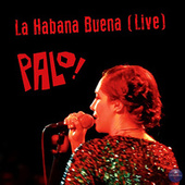 La Habana Buena (Live) fra PALO!