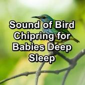 Sound of Bird Chipring for Babies Deep Sleep de Yoga