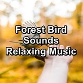 Forest Bird Sounds Relaxing Music by Bird Sounds