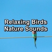 Relaxing Birds  Nature Sounds by Meditation Spa