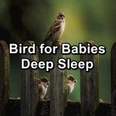 Bird for Babies Deep Sleep by The Birds