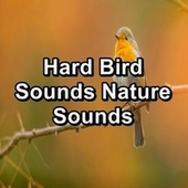 Hard Bird Sounds Nature Sounds by Spa Music (1)