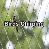 Birds Chirping by Nature Bird Sounds