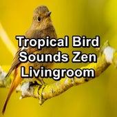 Tropical Bird Sounds Zen Livingroom by Thunderstorm Sleep
