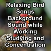 Relaxing Bird Songs  Background Sound while Working Studying and Concentration by Spa Music (1)