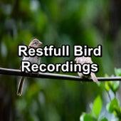 Restfull Bird Recordings by Nature Bird Sounds
