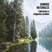 Sonidos Naturales: Calmantes y relajantes sonidos by Nature Sounds (1)