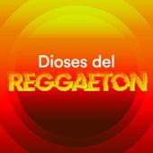 Dioses del Reggaeton de Various Artists