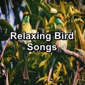 Relaxing Bird Songs by Spa Relax Music