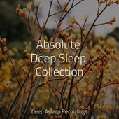 Absolute Deep Sleep Collection by Instrumental