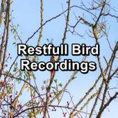 Restfull Bird Recordings by Yoga Music