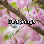 Bird Songs by Nature Bird Sounds