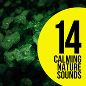 Calming Nature Sounds by Nature Sounds (1)