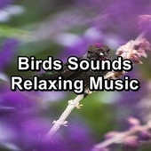 Birds Sounds Relaxing Music by Nature And Bird Sounds